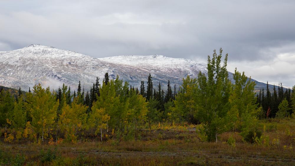 Yukon D8-2.jpg