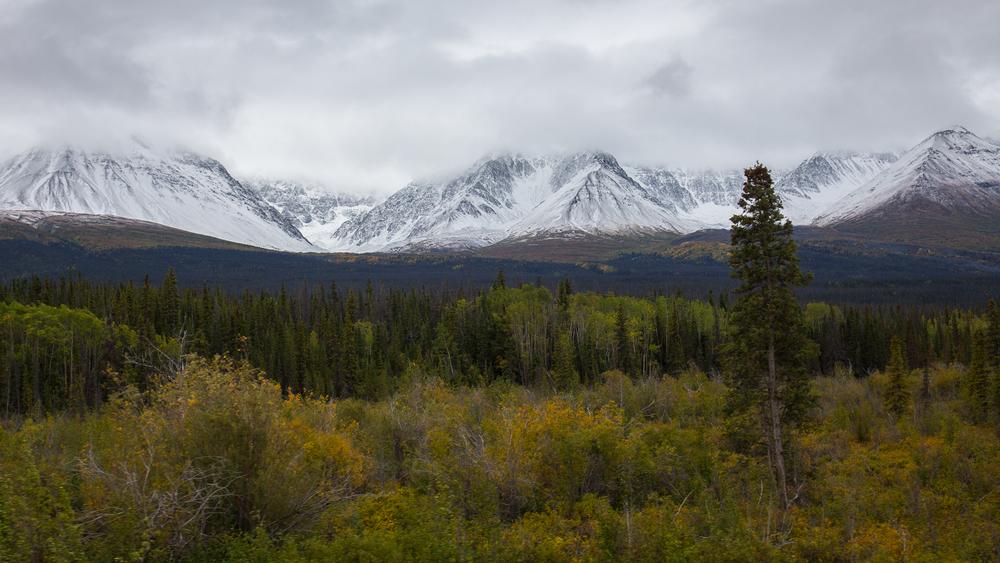 Yukon D8-13.jpg