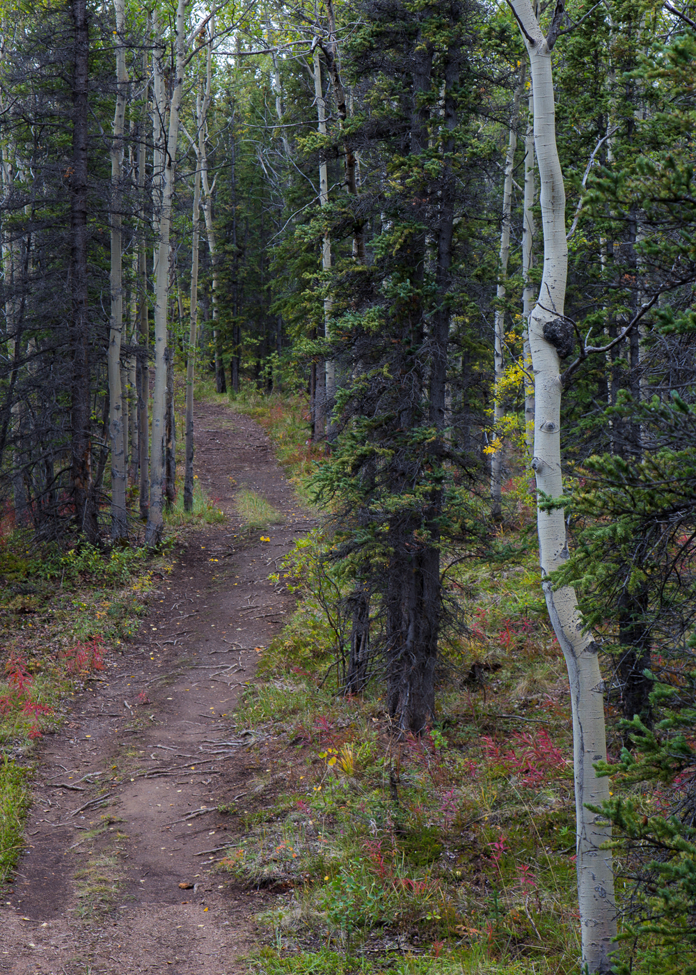 Yukon D8-22.jpg