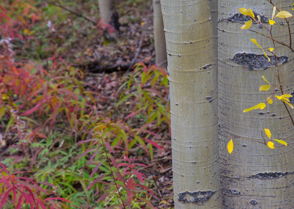 Yukon D8-39.jpg
