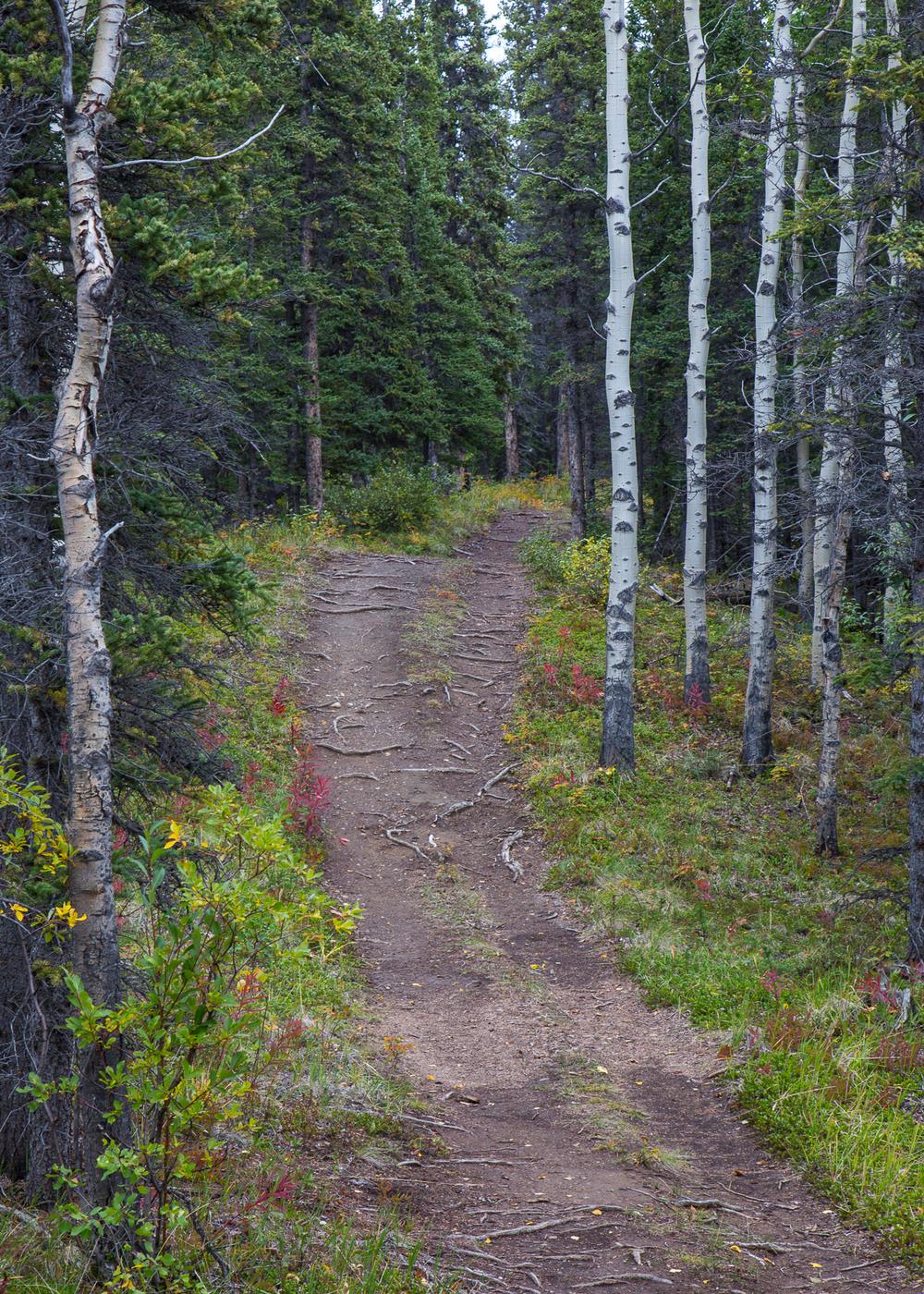 Yukon D8-42.jpg