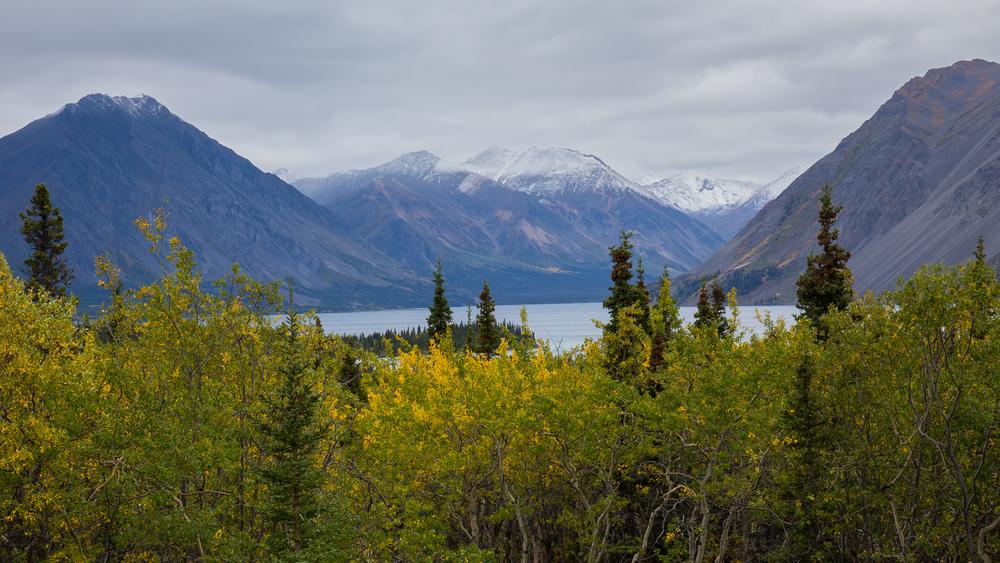Yukon D8-48.jpg