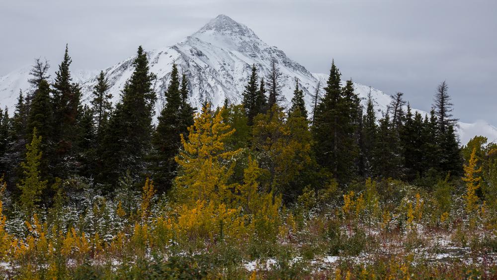 Yukon D9-11.jpg