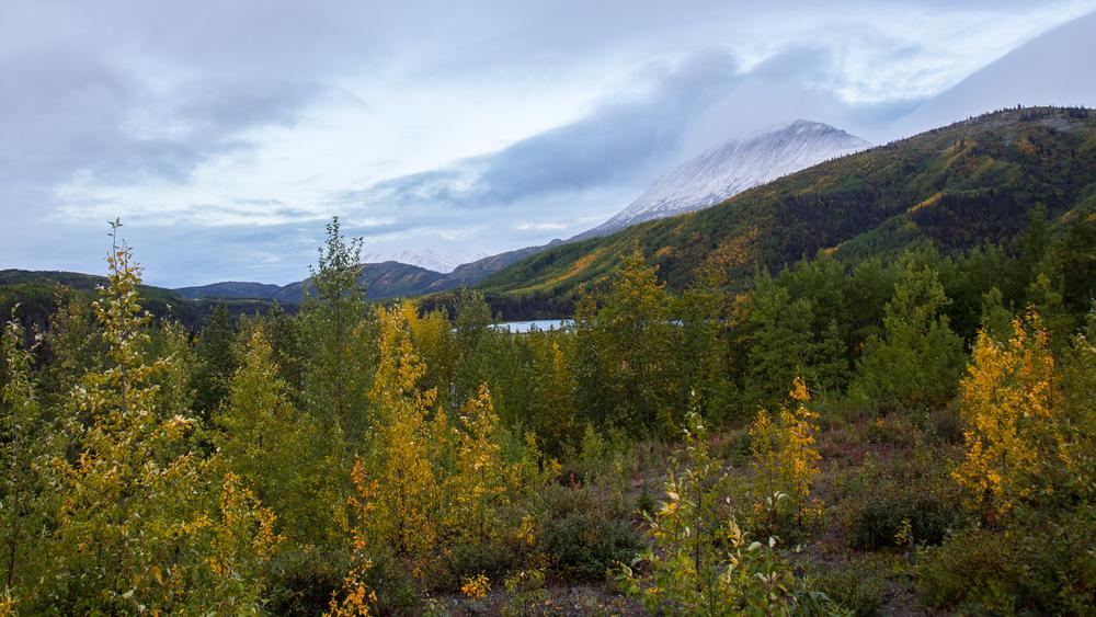 Yukon D9-1.jpg