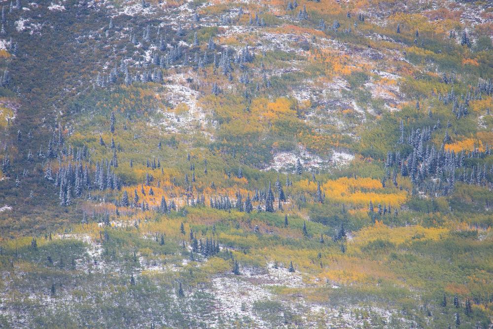 Yukon D9-62.jpg