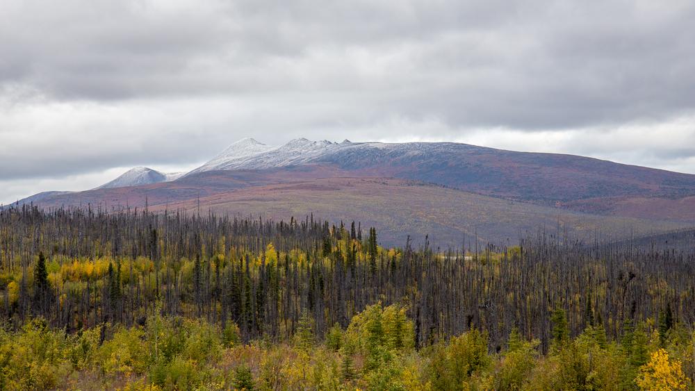 Yukon D10-7.jpg