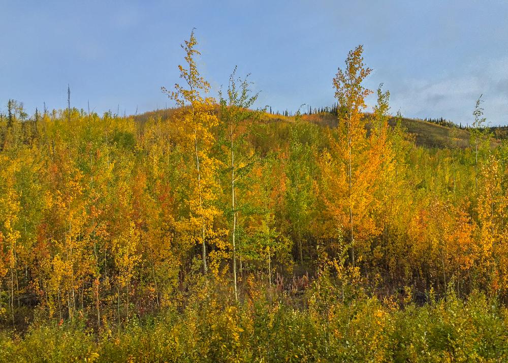 Yukon D10-5.jpg