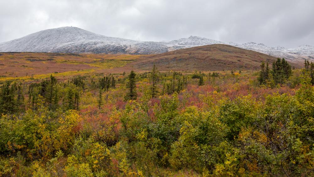 Yukon D10-9.jpg
