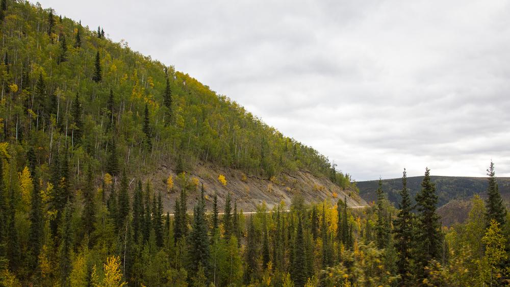 Yukon D10-24.jpg