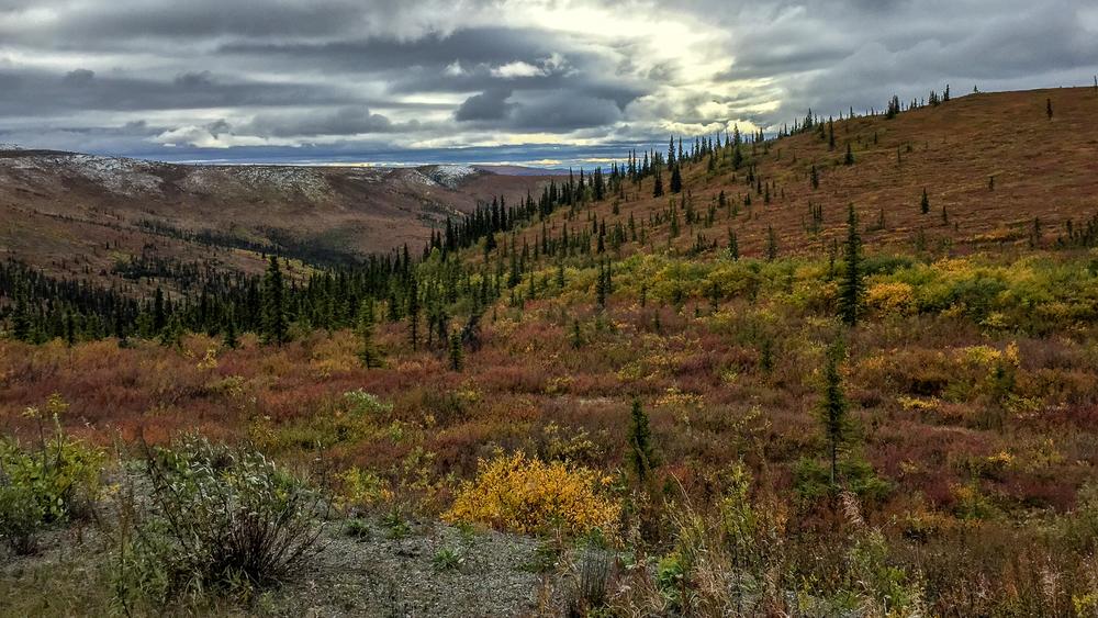 Yukon D10-45.jpg