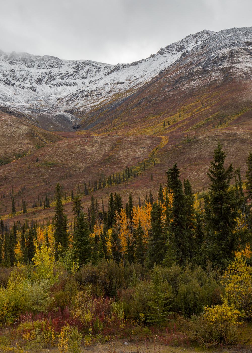 Yukon D11-42.jpg