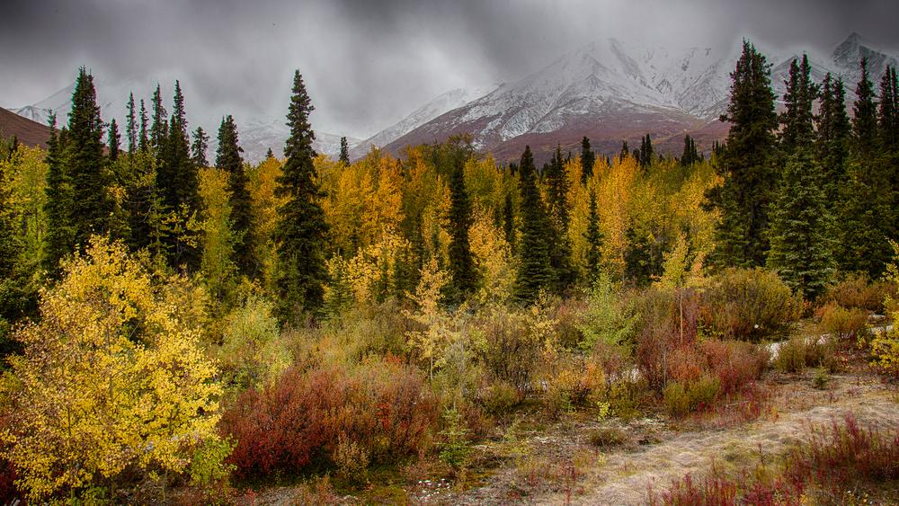 Yukon D11-43.jpg