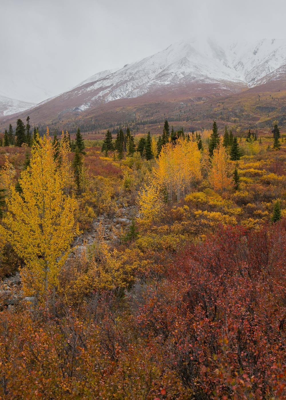 Yukon D11-58.jpg