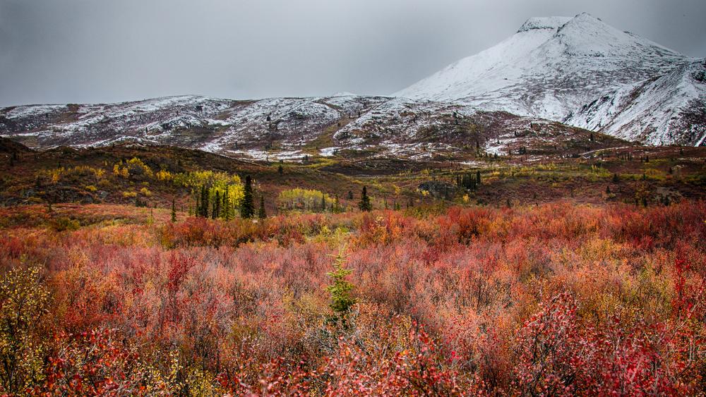 Yukon D11-55.jpg
