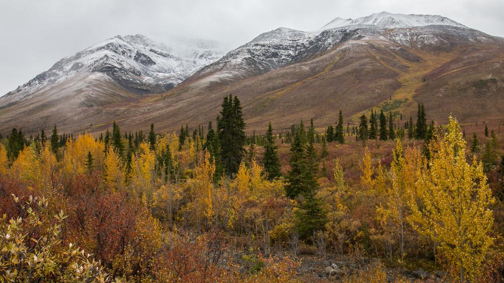 Yukon D11-77.jpg