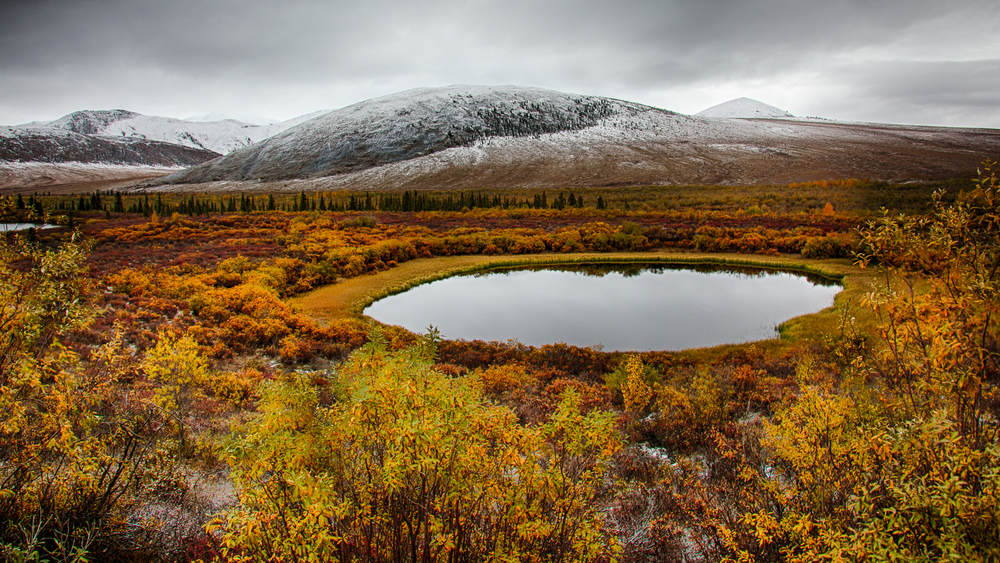 There were small lakes dotting the tundra during the first hour of the drive.