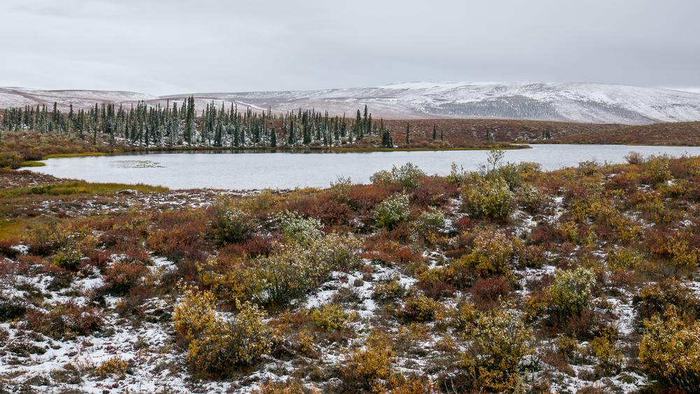 Yukon D12-5.jpg