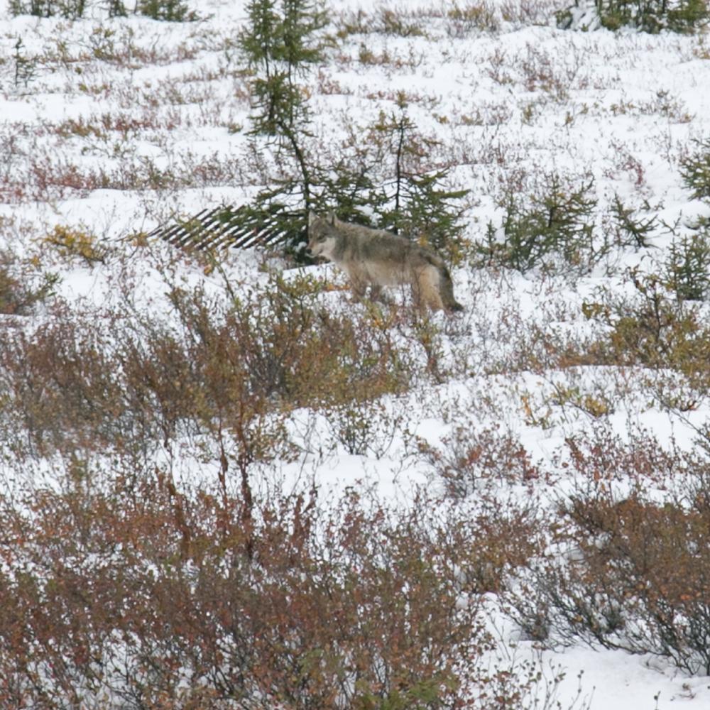 Yukon D12-25.jpg