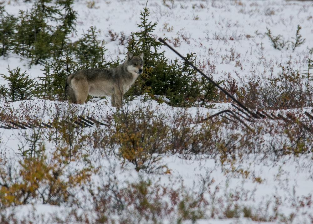 Yukon D12-27.jpg