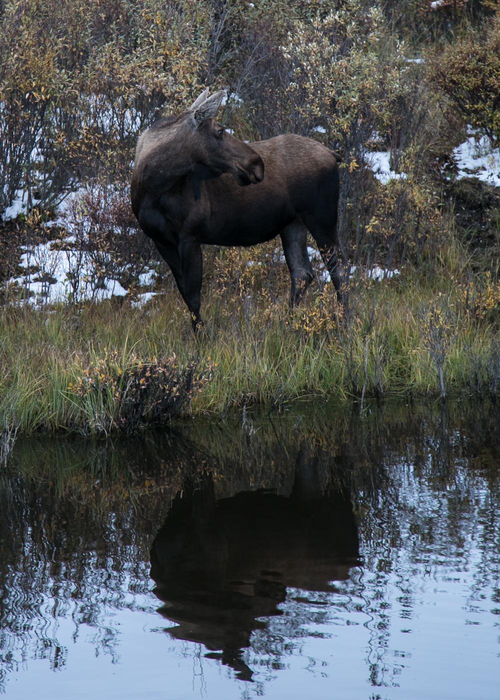 Yukon D12-49.jpg