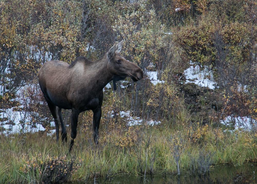 Yukon D12-50.jpg
