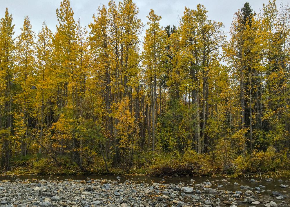 Yukon D13-36.jpg