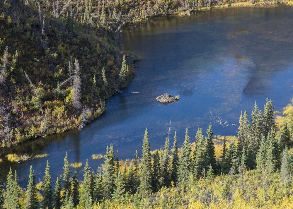Yukon D14-6.jpg