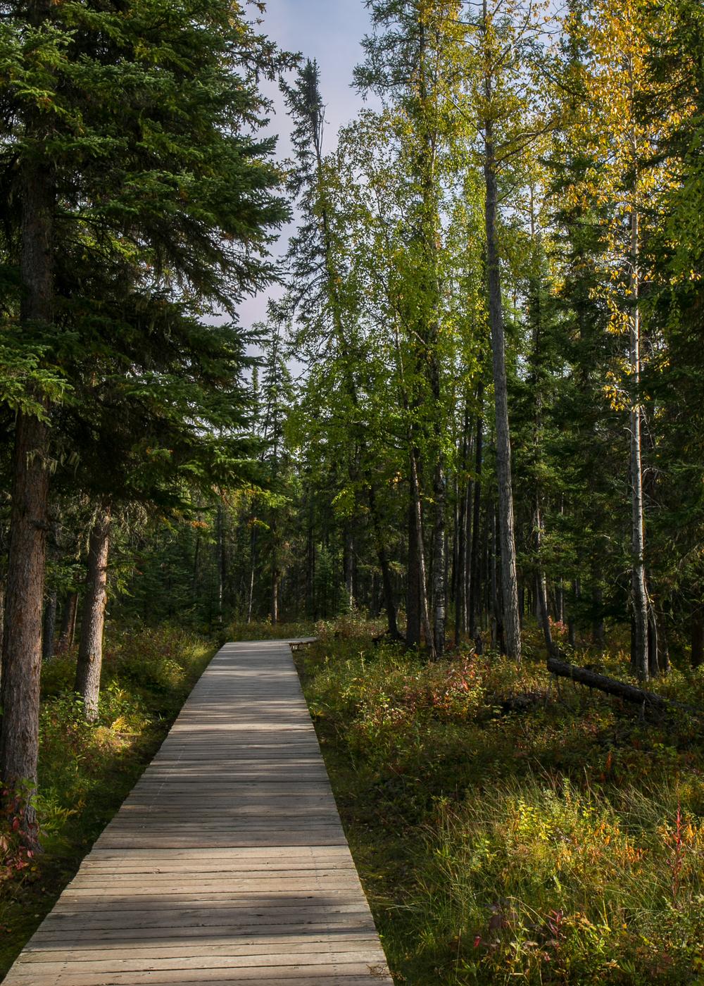 Yukon D15-60.jpg