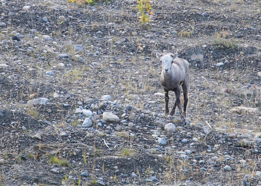 Yukon D16-3.jpg