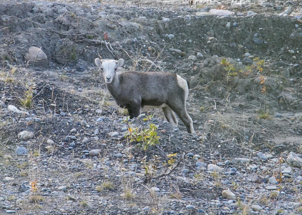 Yukon D16-5.jpg