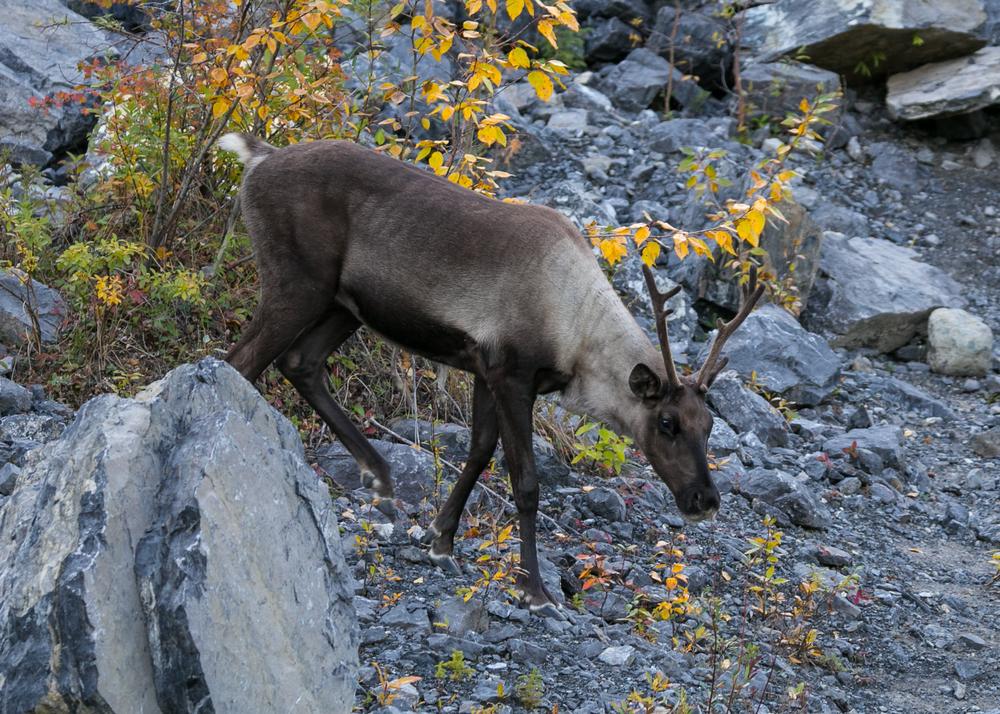 Yukon D16-47.jpg