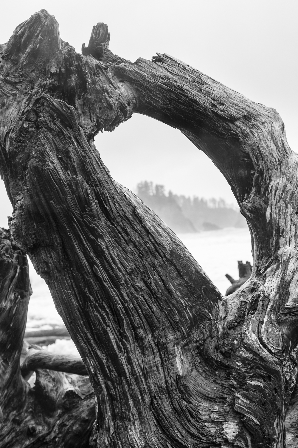 Driftwood on Rialto Beach.