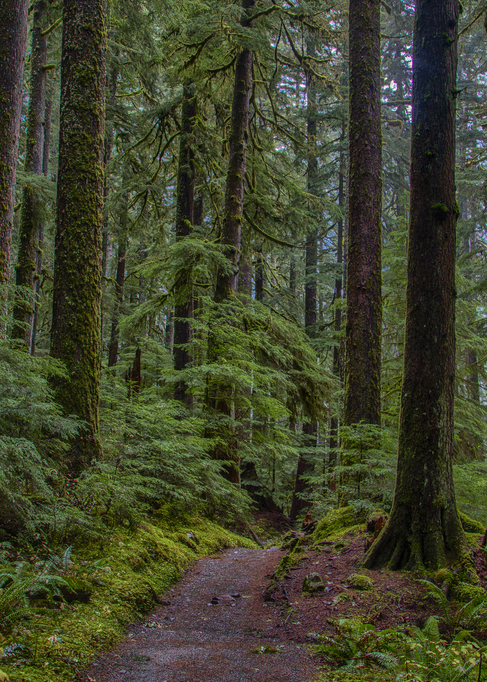 More amazing scenery along the Sol Duc Falls trail.