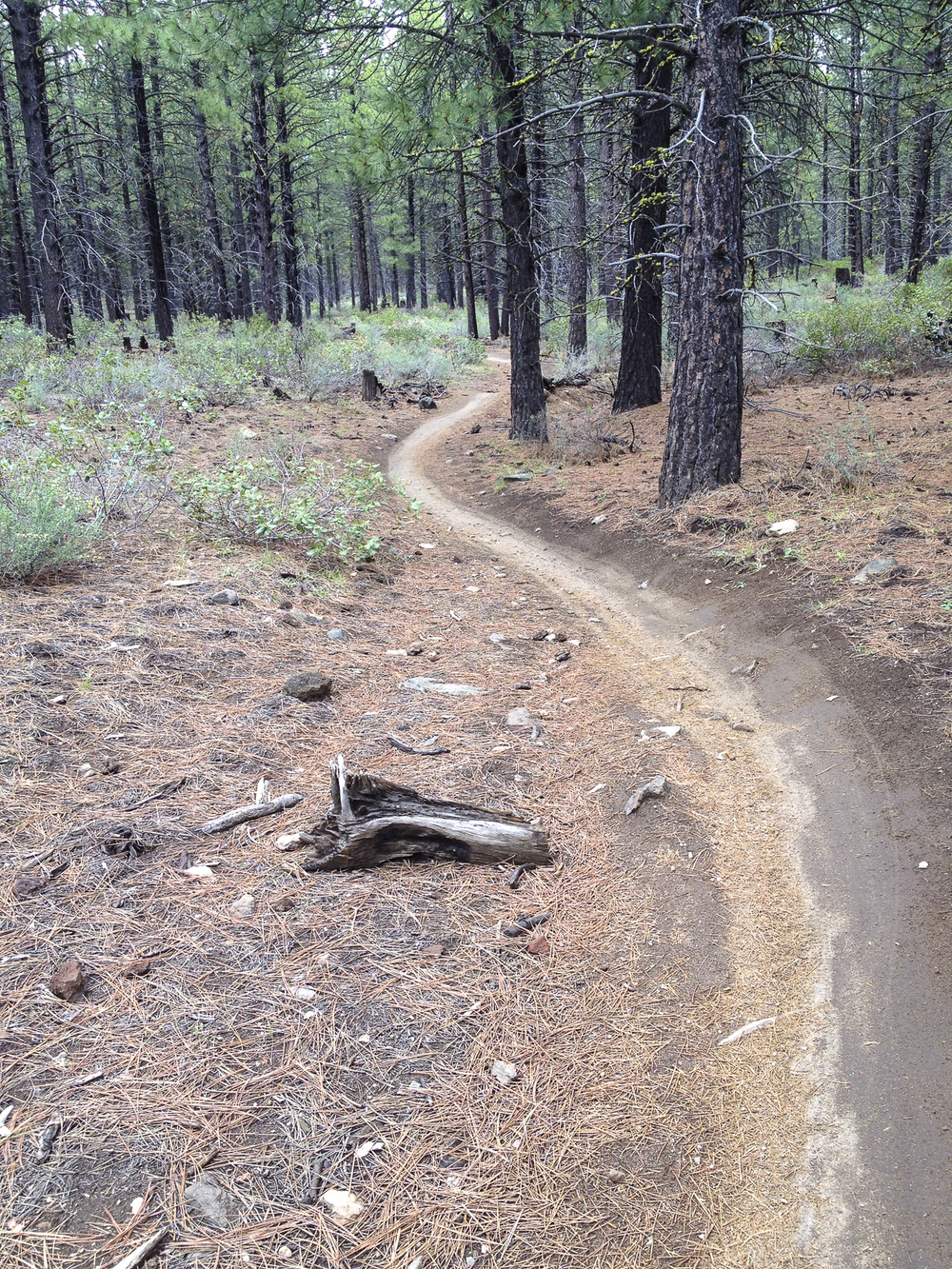 Some of the mountain bike trails I was riding near Bend Oregon.