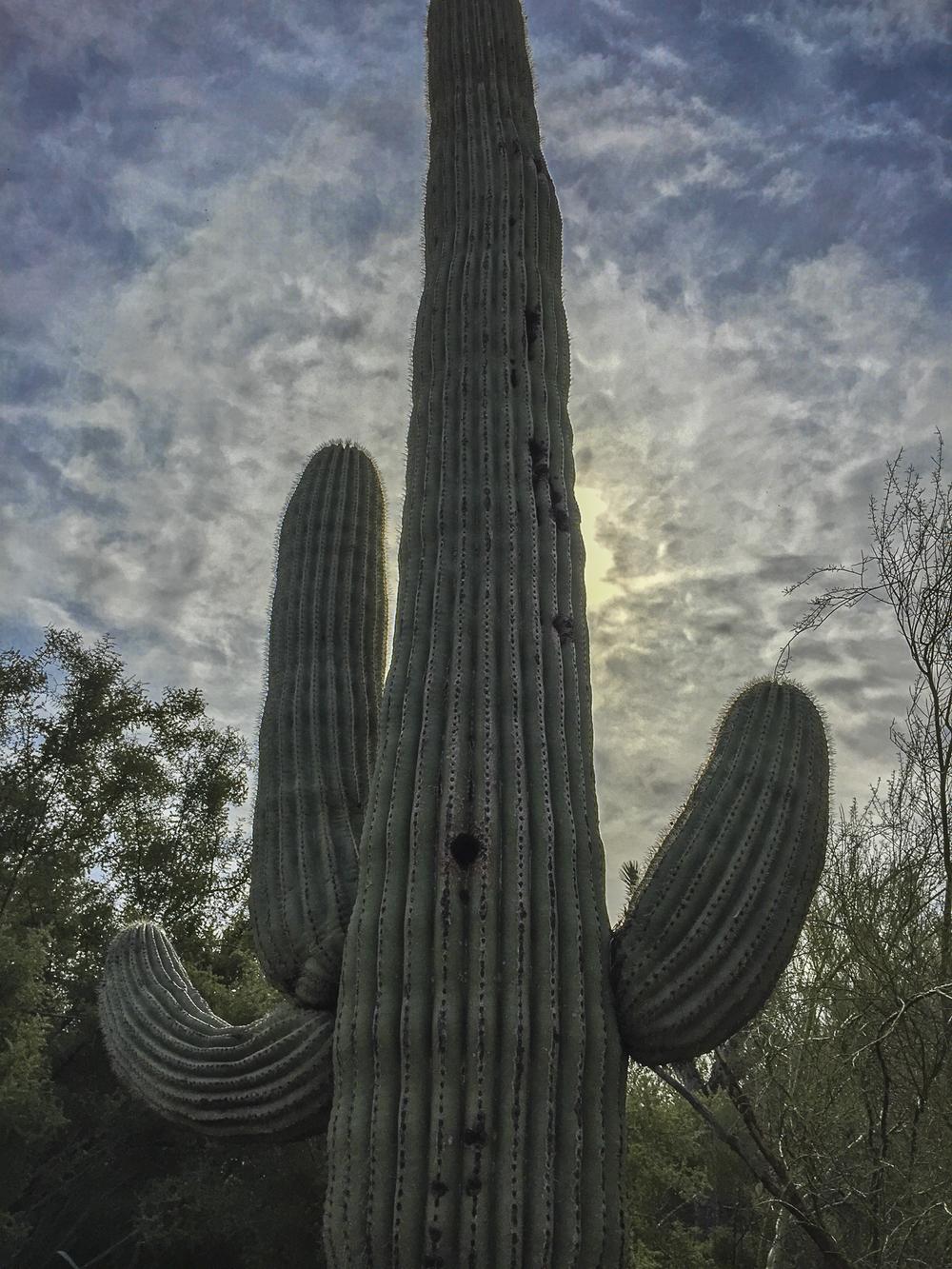 Scottsdale-15.jpg
