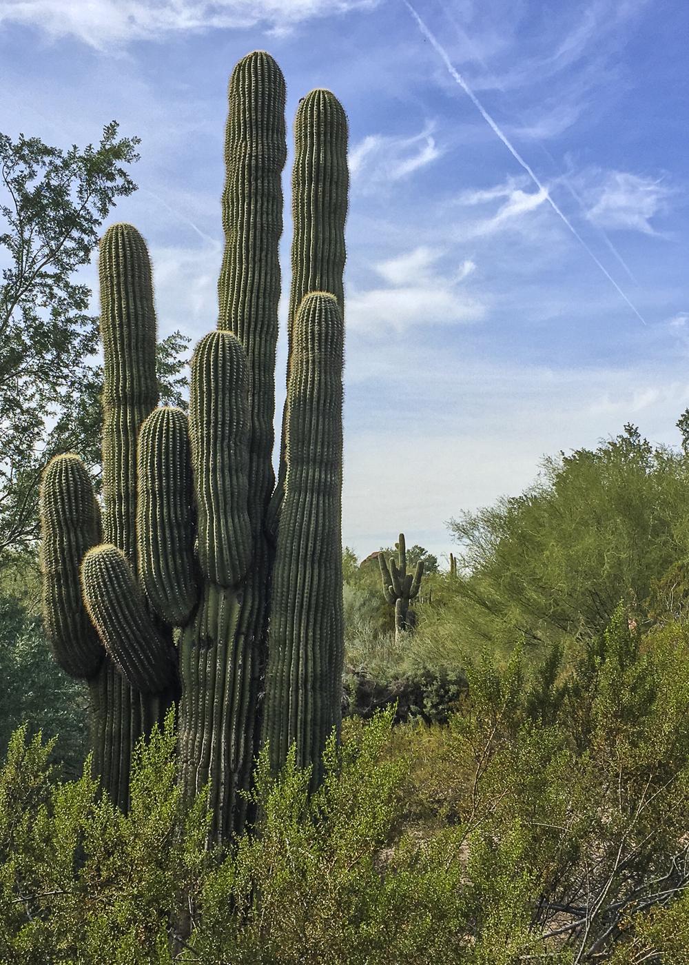 Scottsdale-20.jpg
