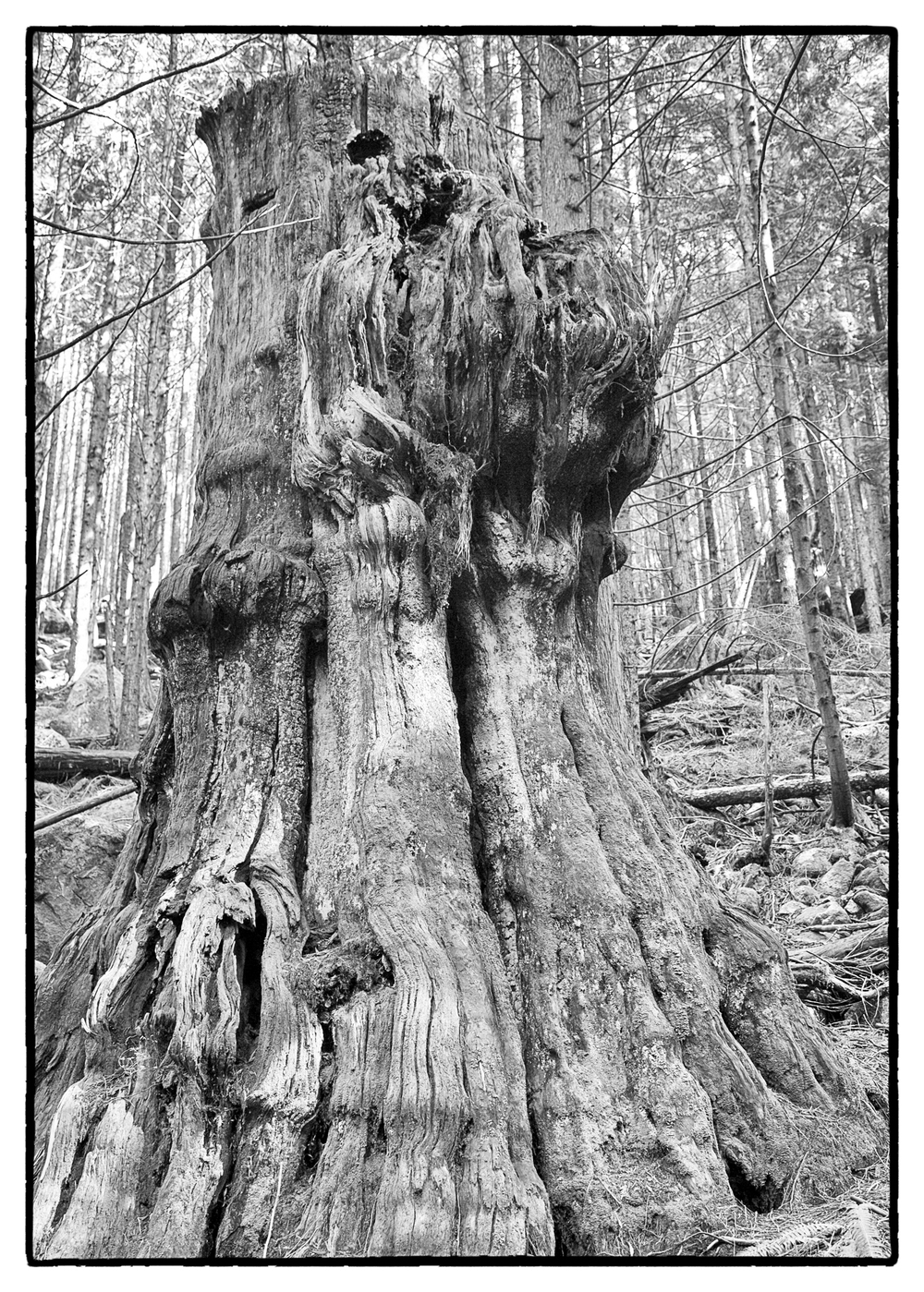 Old growth forest remnants.