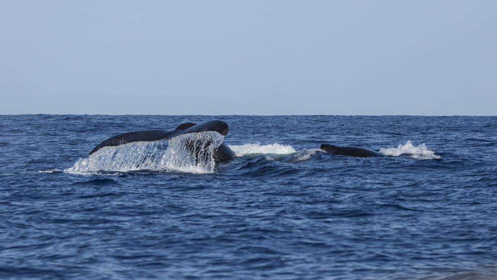 2012 02 Whale Watching-5.jpg