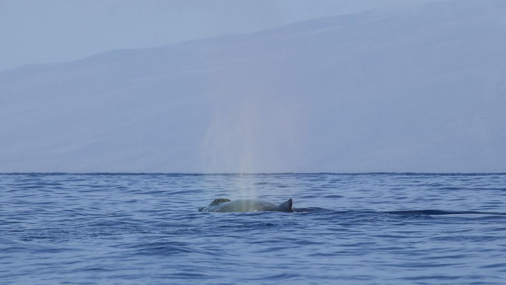 2012 02 Whale Watching-8.jpg