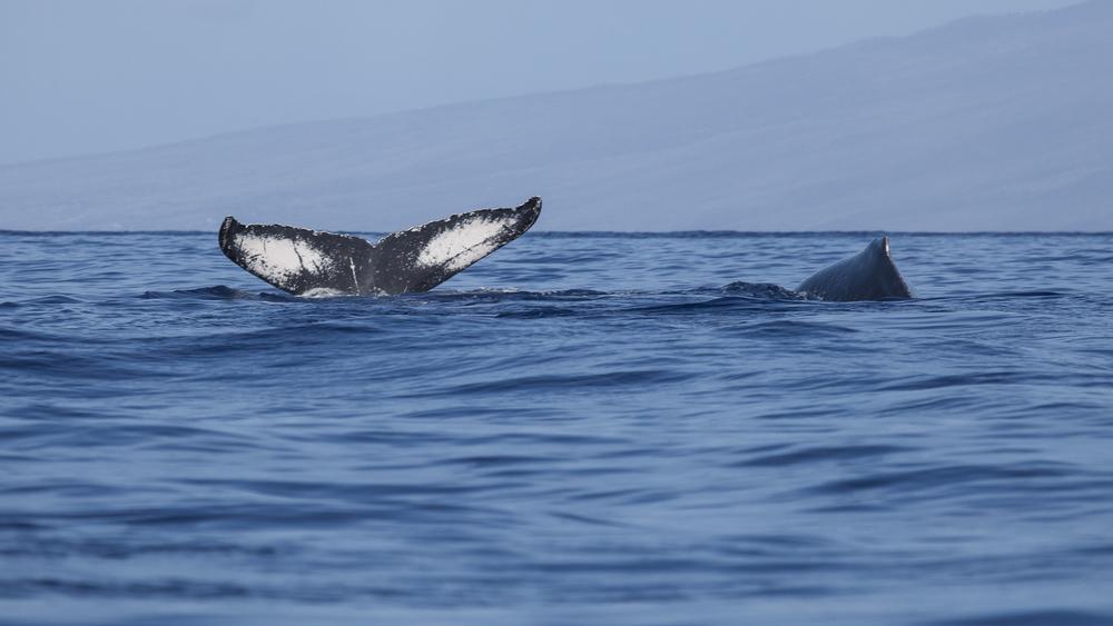 2012 02 Whale Watching-10.jpg