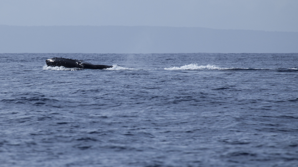 2012 02 Whale Watching-11.jpg