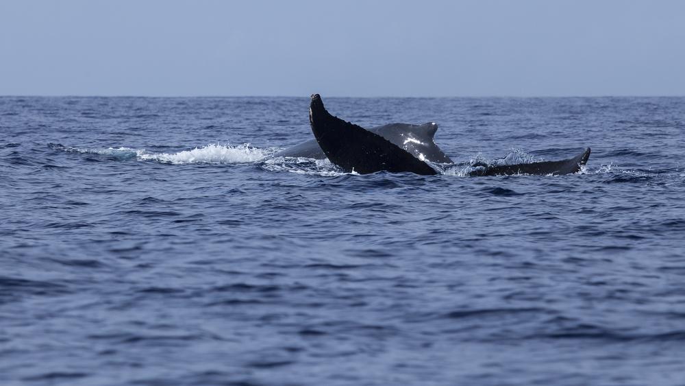 2012 02 Whale Watching-12.jpg
