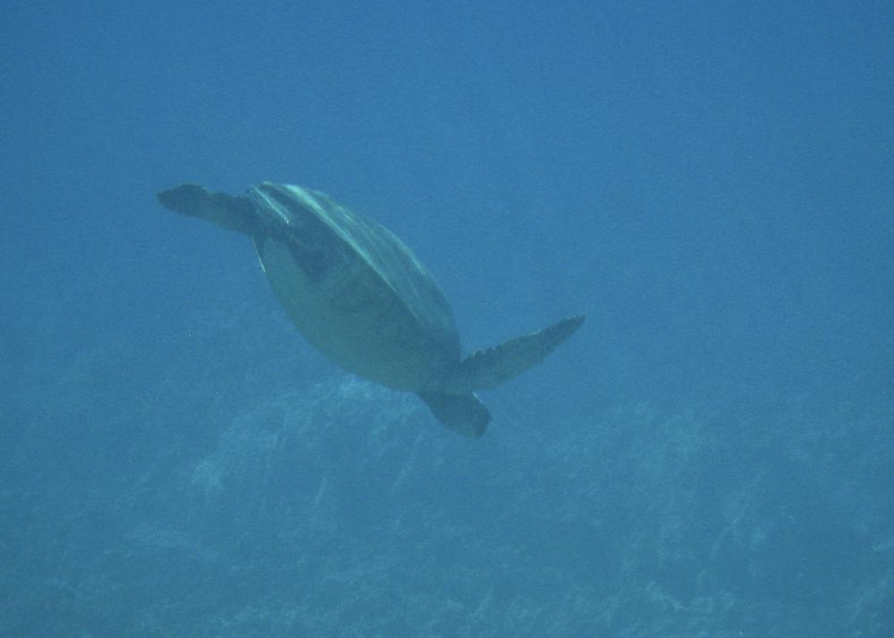 2012 02 Snorkling II-7.jpg