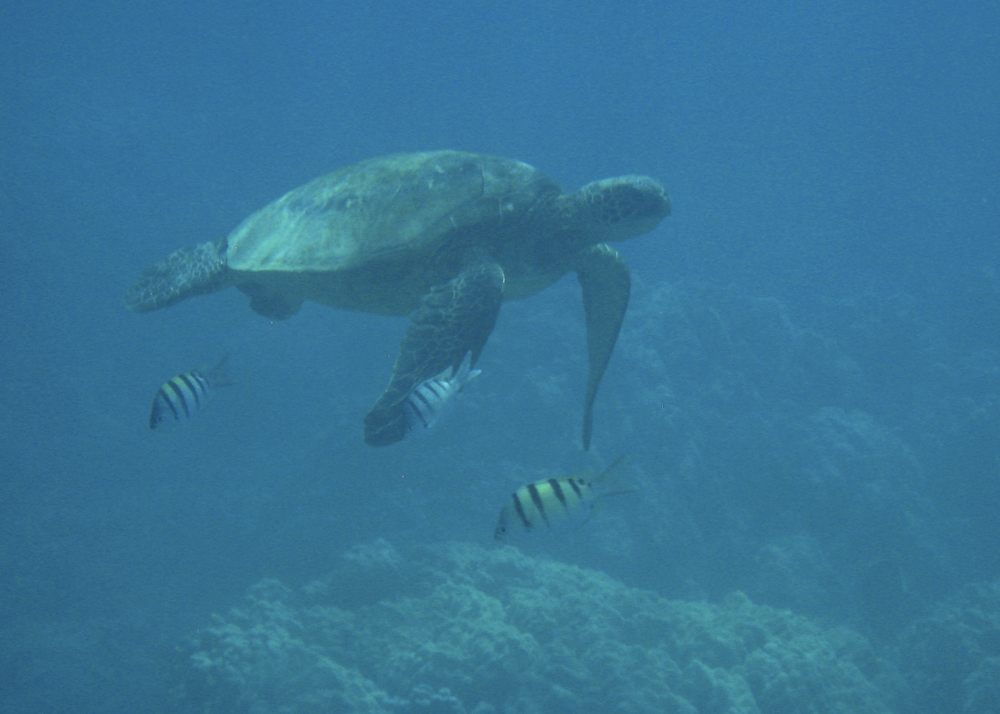 2012 02 Snorkling II-11.jpg