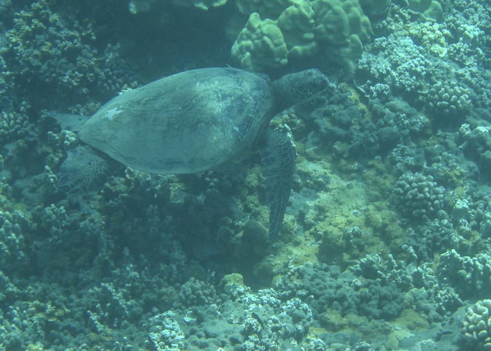 2012 02 Snorkling II-9.jpg