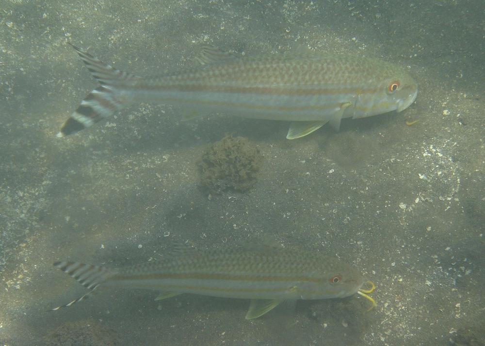 2012 02 Snorkling II-13.jpg