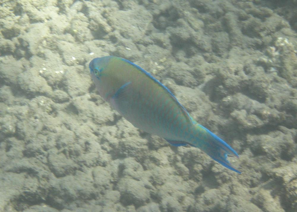 2012 02 Snorkling II-14.jpg