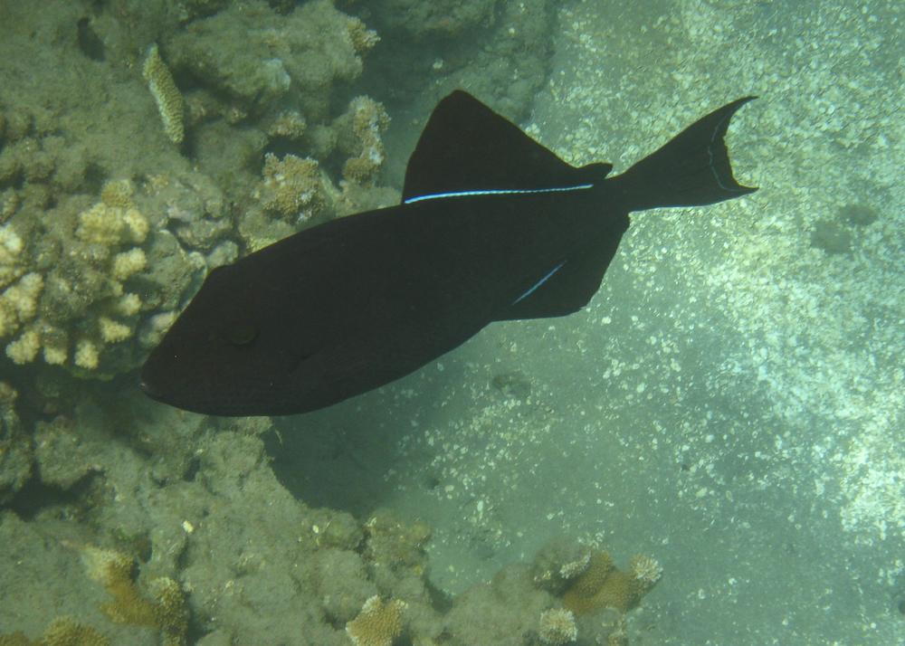 2012 02 Snorkling II-16.jpg