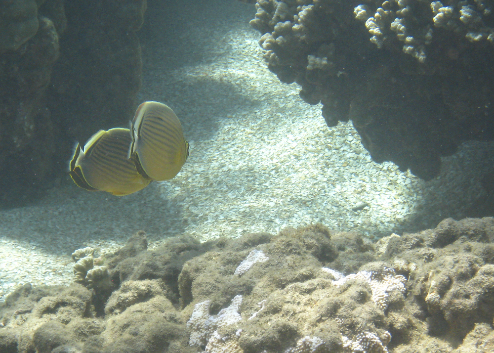2012 02 Snorkling II-15.jpg