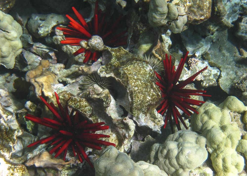 2012 02 Snorkling II-19.jpg